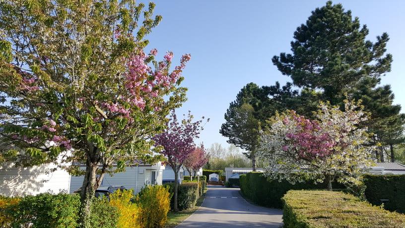 camping-cerisiers-allees-3