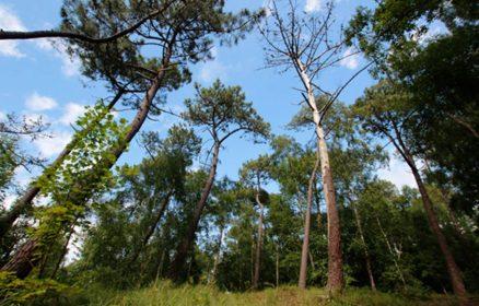 Visite guidée – La Forêt du Touquet au fil des saisons